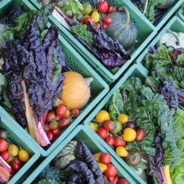 Erweiterung der Solidarischen Landwirtschaft für 2016