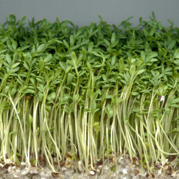 Anleitung – Samen einpflanzen